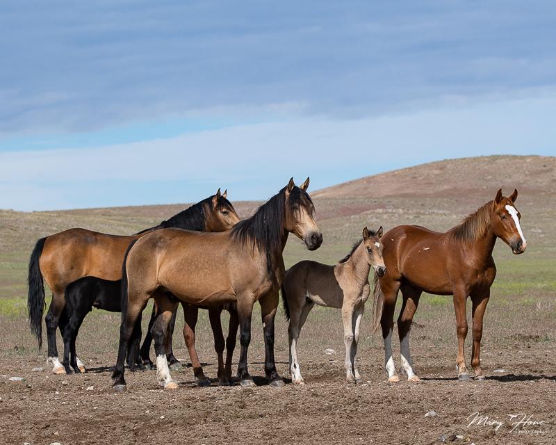 wild horse family band