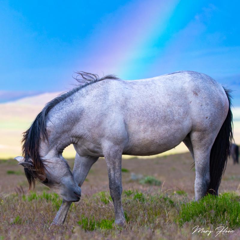 rainbow and wild horse
