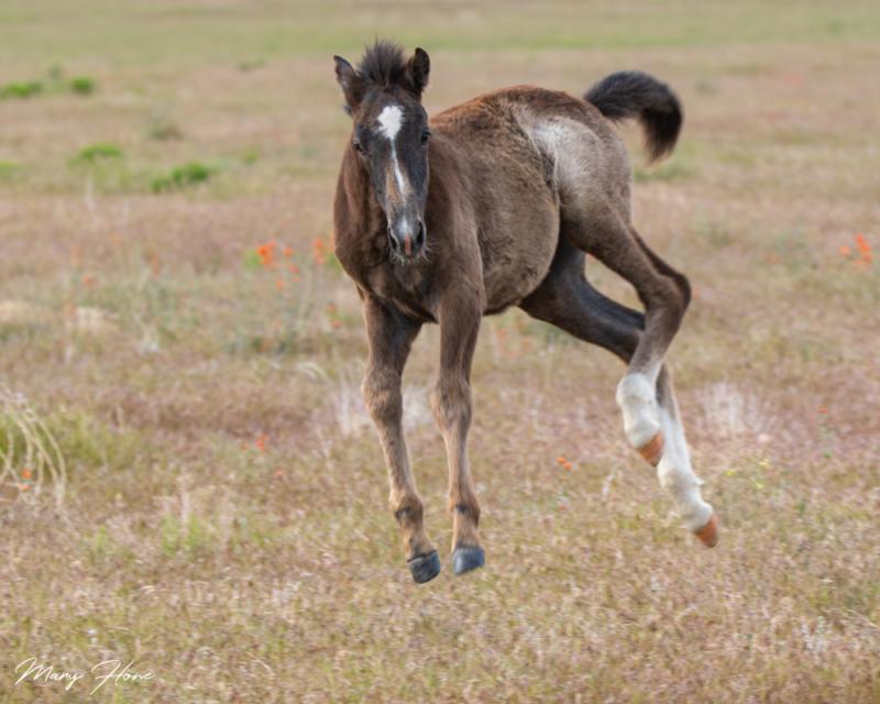 jumping wild foal