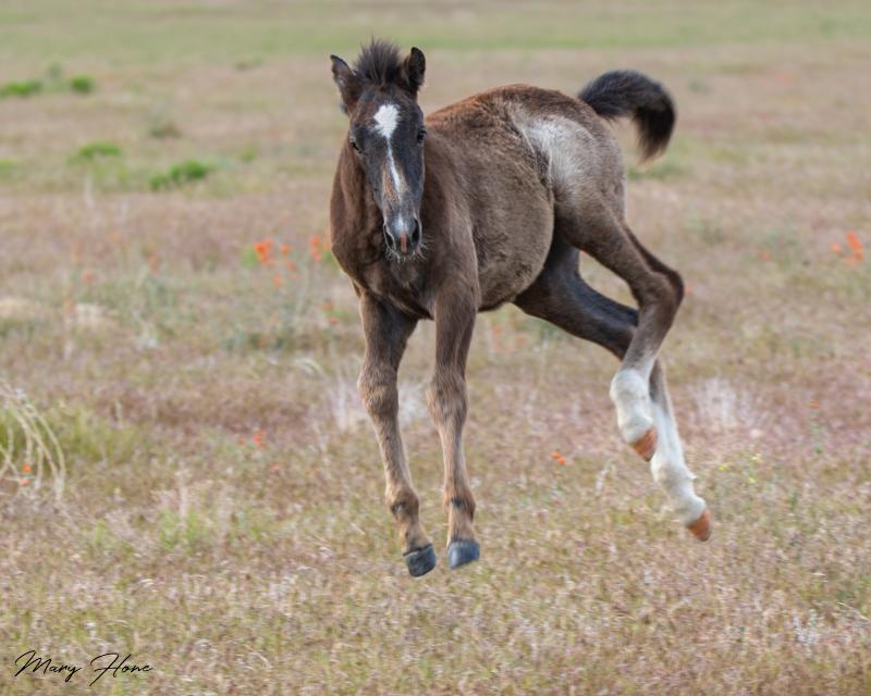 Wild Horses Running Wild and Free