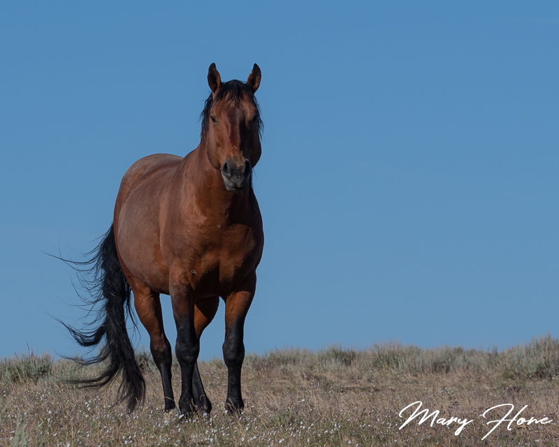 wild horses of oregons south steens