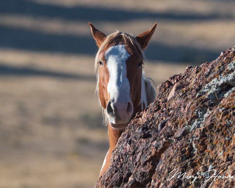 These Horses, This Place, wild horses