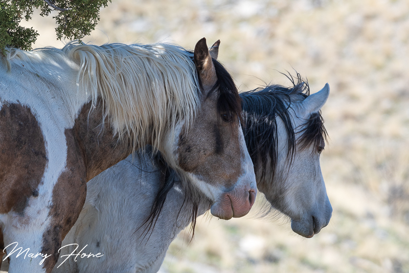 springtime with the wild horses