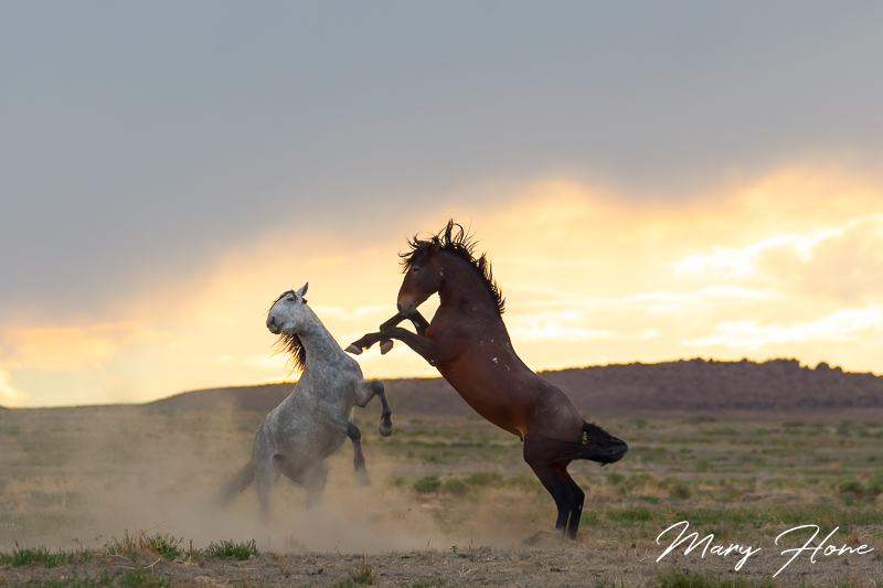 Sunset and wild horses